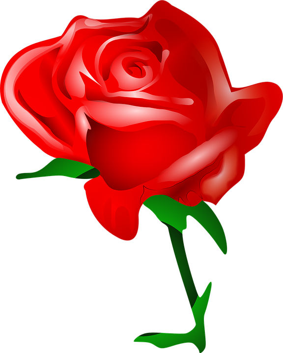 Rose Flower Love Romantic