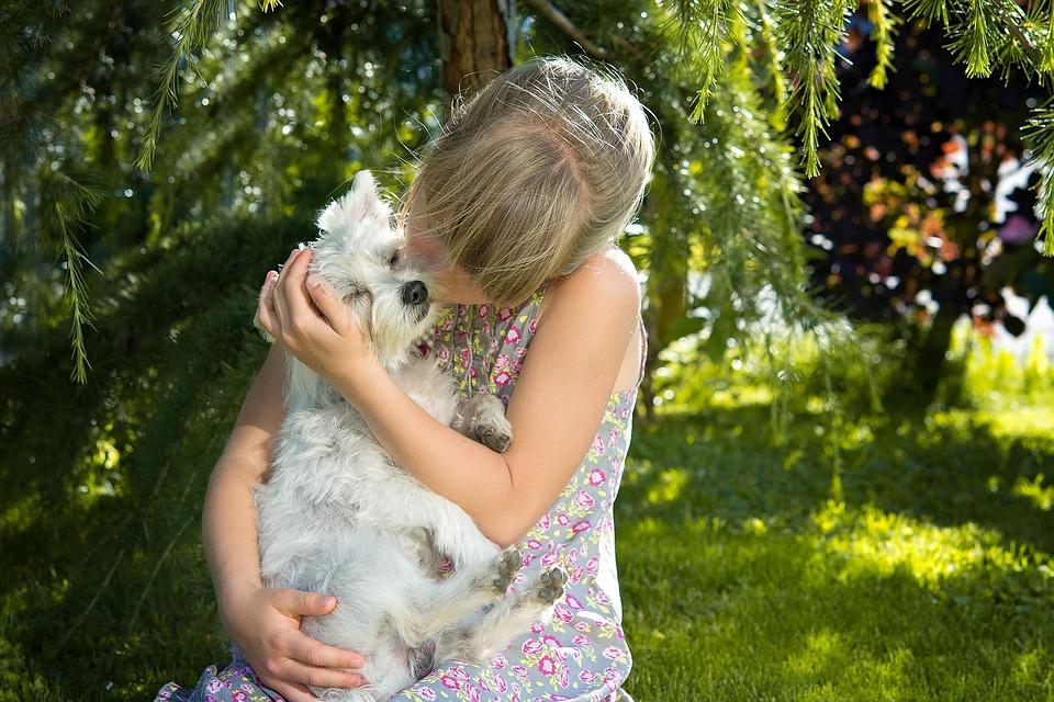 Child, Girl, Dog, Small Dog, White, Love, Snuggle