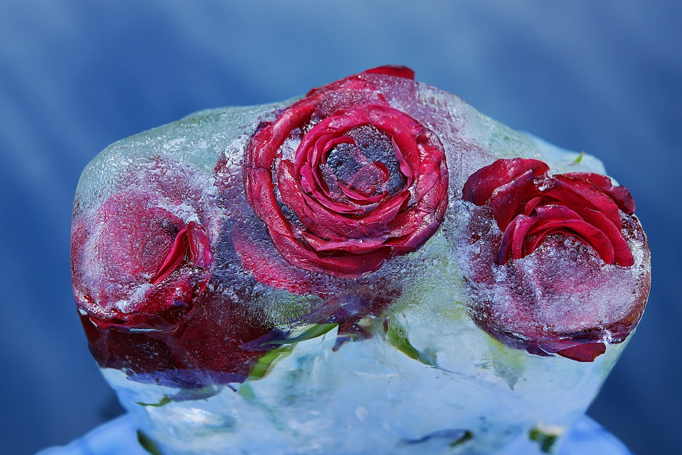 Red Roses, Flower, Rose Bloom, Frozen, Ice, Love Symbol