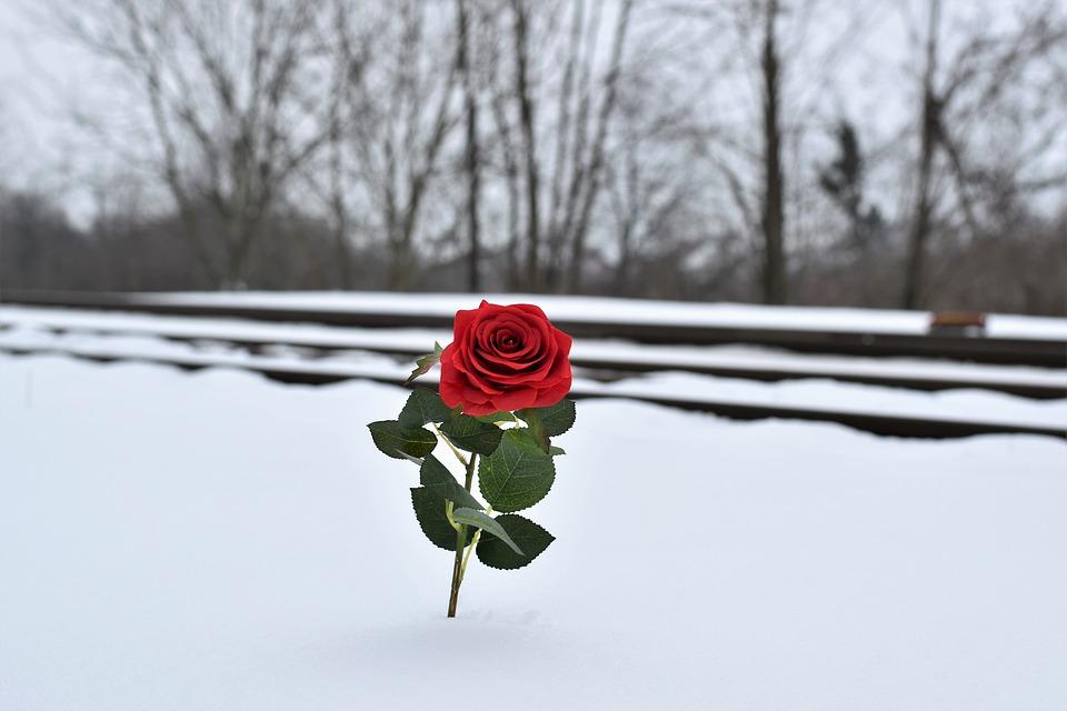 Red Rose In Snow, Love Symbol, Railway
