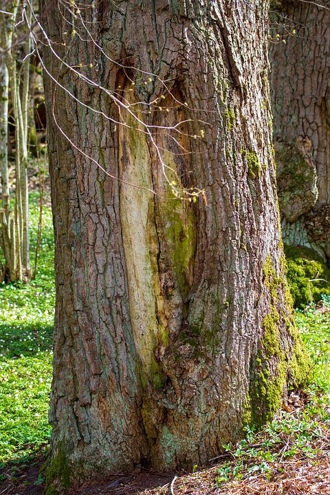Tree Trunk, Tree, Heart, Love, Spring, Forest