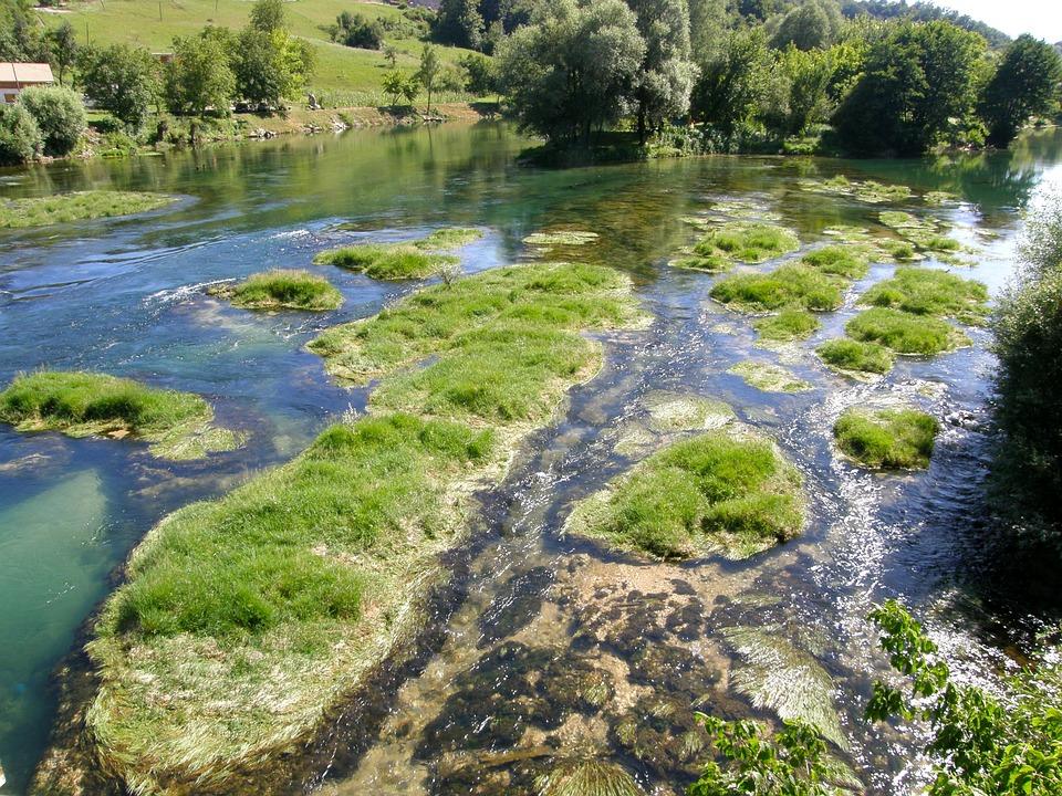 Swamp, Low Water, River