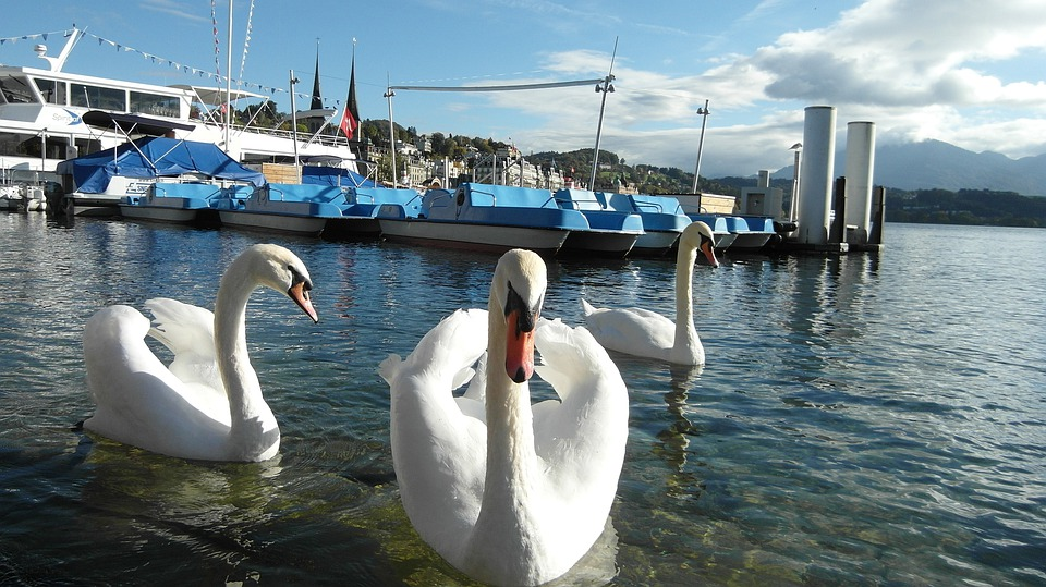 Lucerne, Lake Lucerne Region, Swans, Boats, Water, Blue