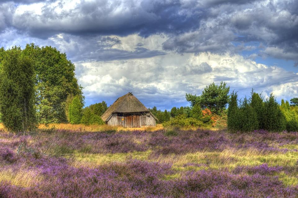 Lüneburg Heath, Nature, Heide, Heather, Hiking