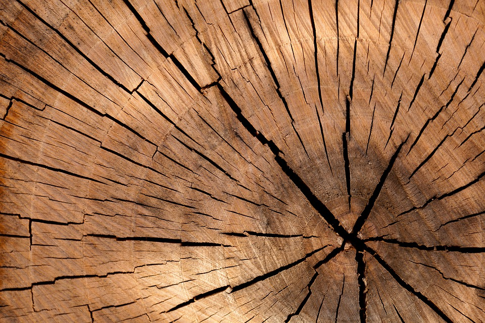 Lumber, Wood, Background, Tree Log, Tree, Brown, Cut