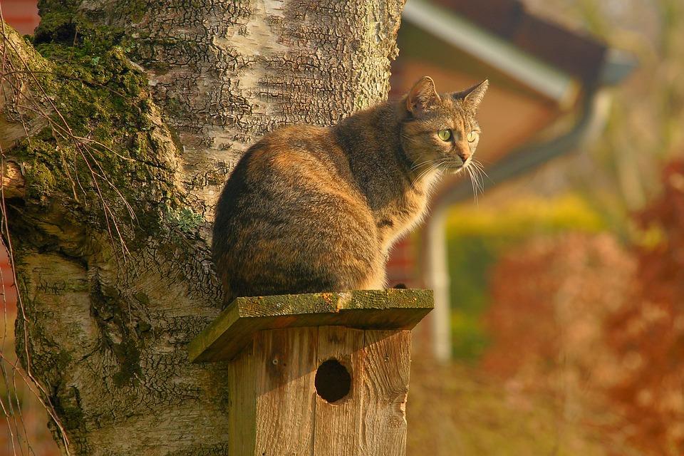 Cat, Domestic Cat, Garden, Lurking, Watch, Spring, Pet