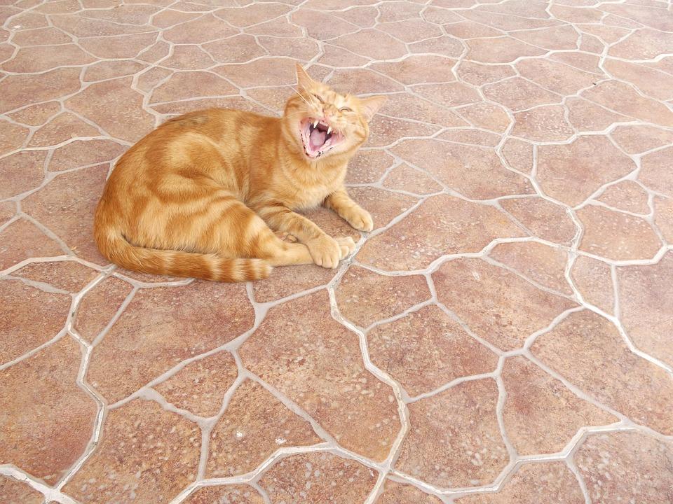 Cat, Lying, Yellow, Brindle, Yawn