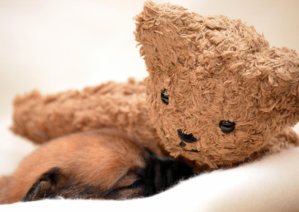 Puppy, Sleeping, Dog, Sleeping Dog, Pet, Lying Dog