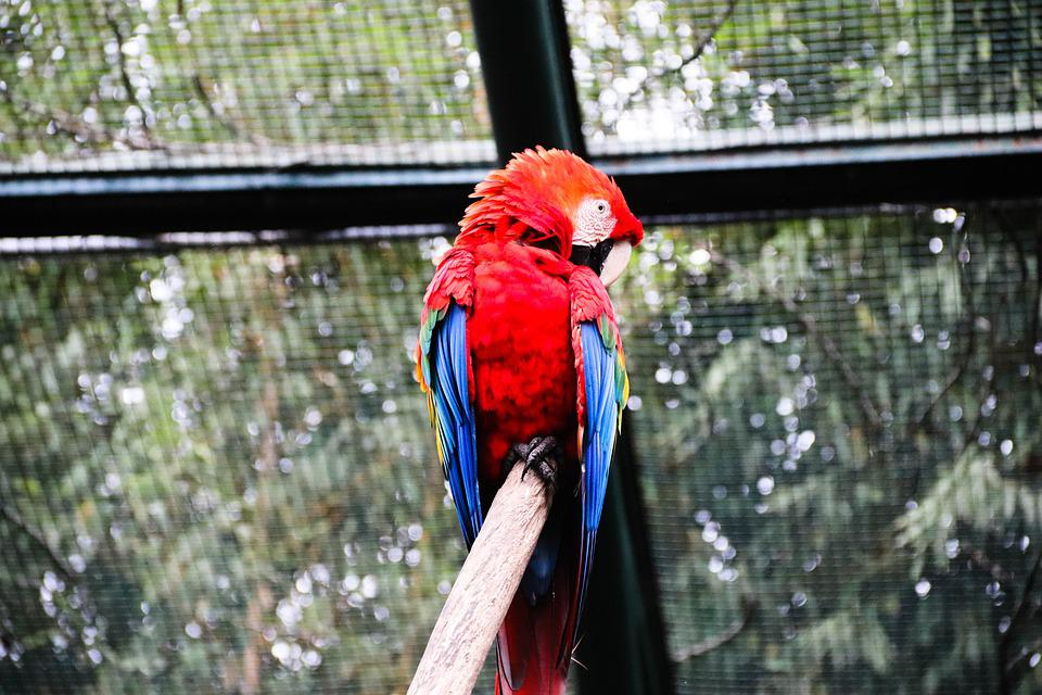 Macaw, Parrot, Ara, Ara Macao, Park, Zoo, Nature, Wild