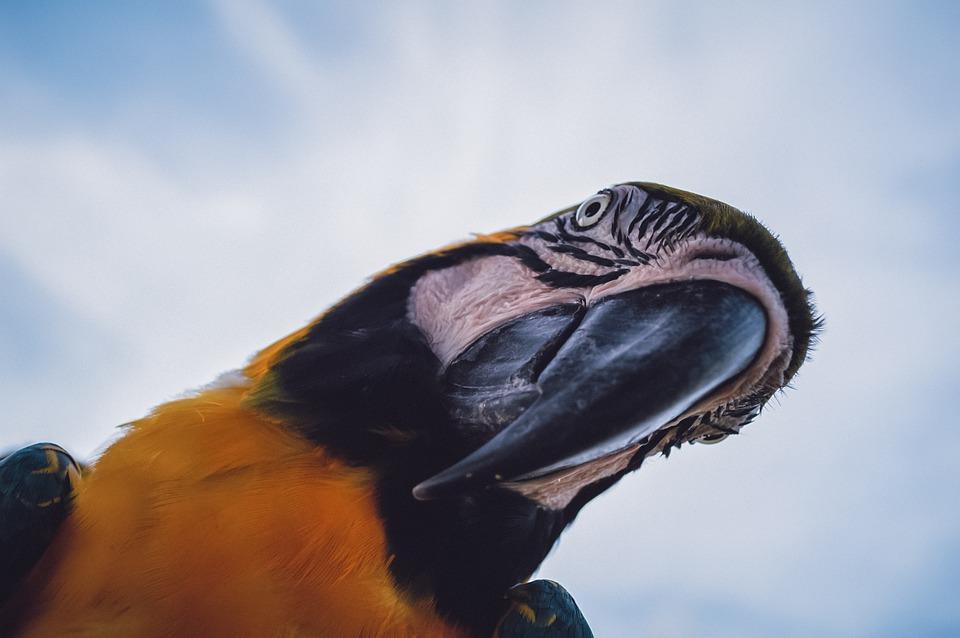 Macaw, Bird, Beak, Bill, Parrot, Animal, Wild, Wildlife