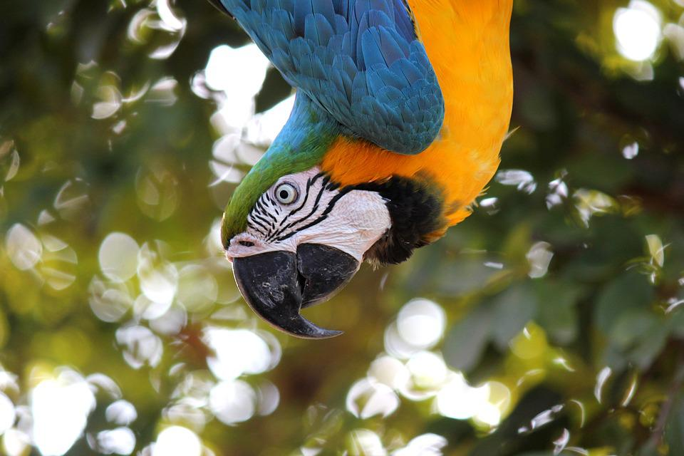 Macaw, Ave, Jungle, Parrot, Animal, Tropical Bird, Bird