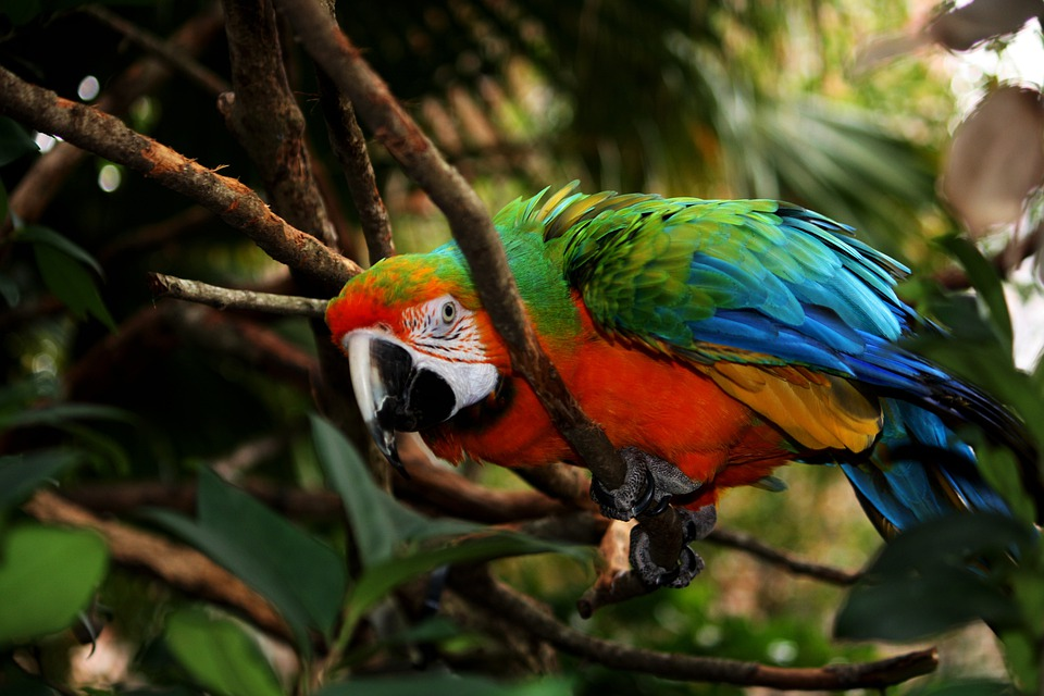 Parrot, Macaw, Feathers, Bird, Fly, Wings, Feather