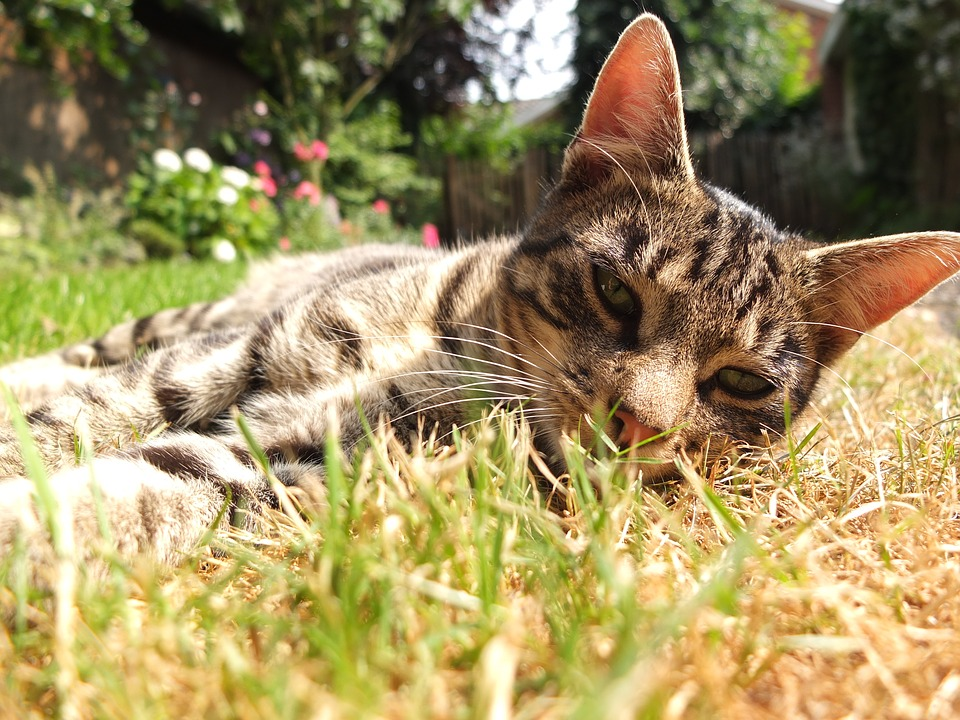 Cat, Garden, Out, Freewheel, Lying, Mackerel