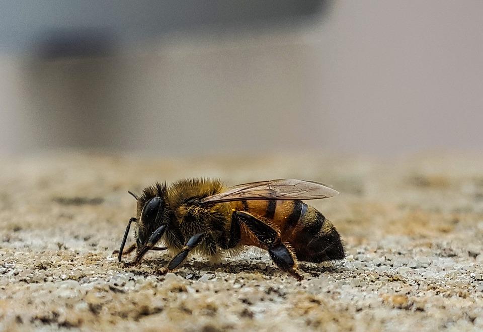 Macro, Bee, Profile, Nature, Insect, Wildlife, Animal