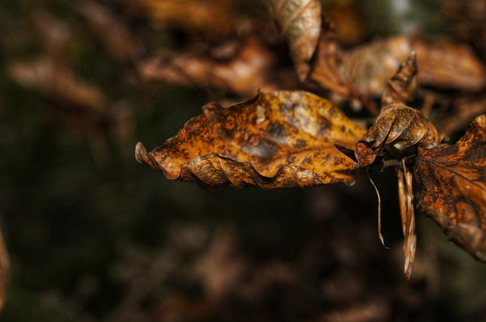 Autumn, Leaves, Forest, Nature, Macro, Branch