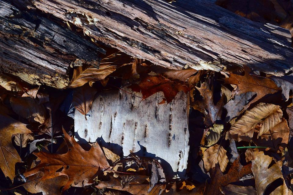 Leaves, Bark, Autumn, Colorful, Macro, Golden, Brown