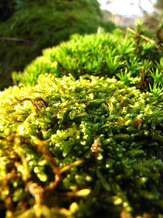 Green, Forest, Autumn, Moss, Macro