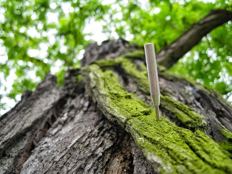Tree, Still Life, Background, Nature, Macro