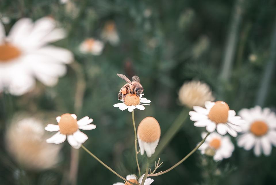 Bee, Flower, Insect, Nature, Garden, Macro, Pollen