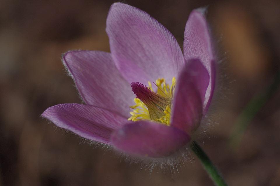 Flower, Blossom, Bloom, Pink, Macro, Close, Spring