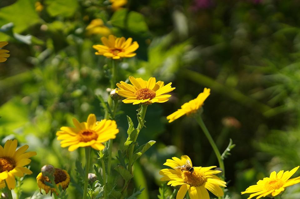 Flower, Blossom, Bloom, Yellow, Macro, Summer