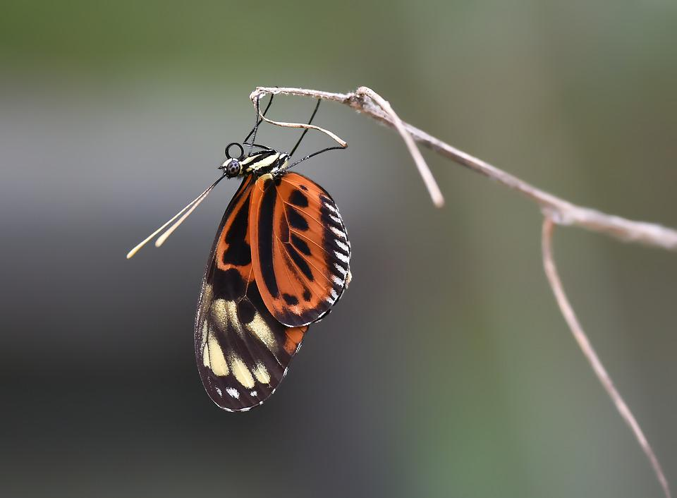 Butterfly, Kelebek, Macro Böcek, Doğa, Nature