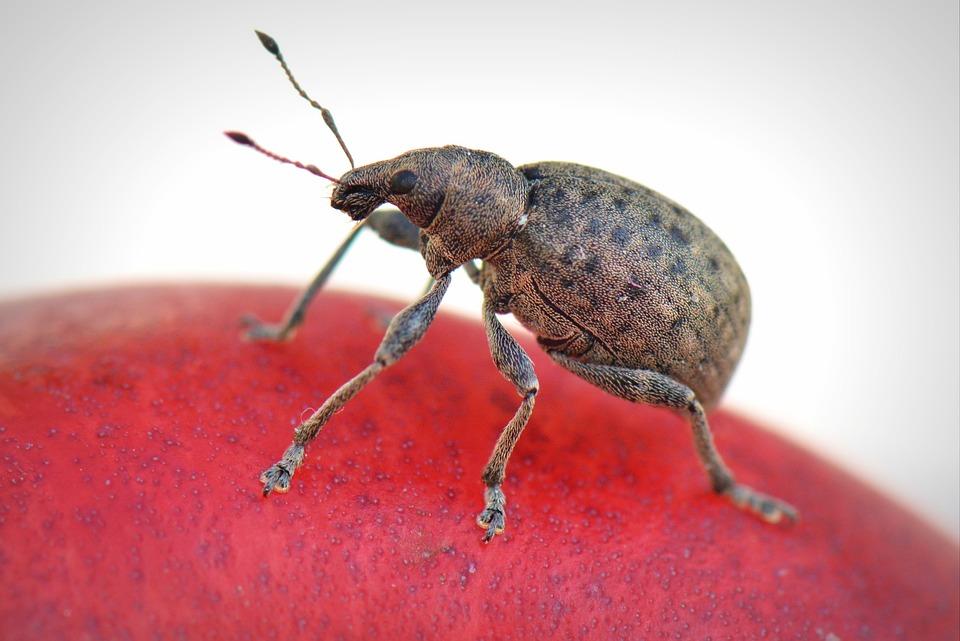 Bug, Animal, Macro