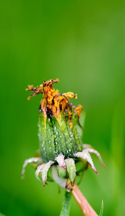 Flower, Insect, Butterfly, Nature, Animal, Macro, Bee