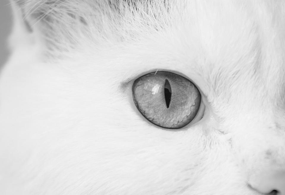 Cat, Cat Eye, Eye, Macro, Closeup, Black White