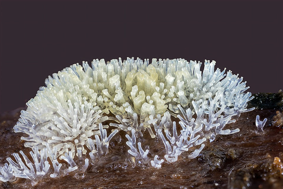 Coral-slime-mold, Macro, Micro, Cells, Nature
