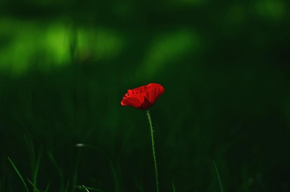 Flower, Macro, Plant, Macro Chichewa, Close, Background