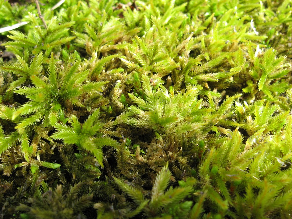 Mosses, Green, Plants, Leaves, Thick, Close Up, Macro