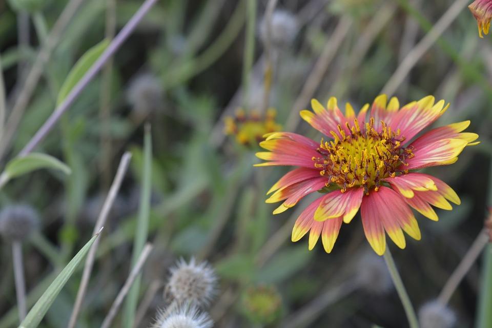 Nature, Flower, Flora, Summer, Outdoors, Macro, Closeup