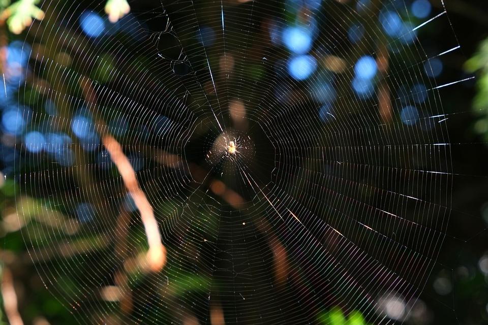 Cobweb, Spider, Close, Nature, Insect, Network, Macro