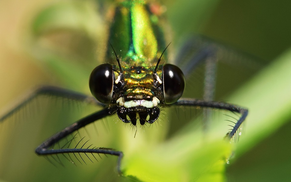 Dragonfly, Close, Macro, Eye, Compound, Insect