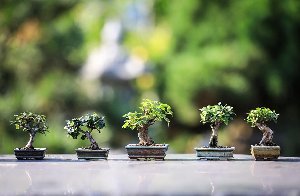 Bonsai, Wood, Flora, Macro, Nature, Japan, Zen, Garden