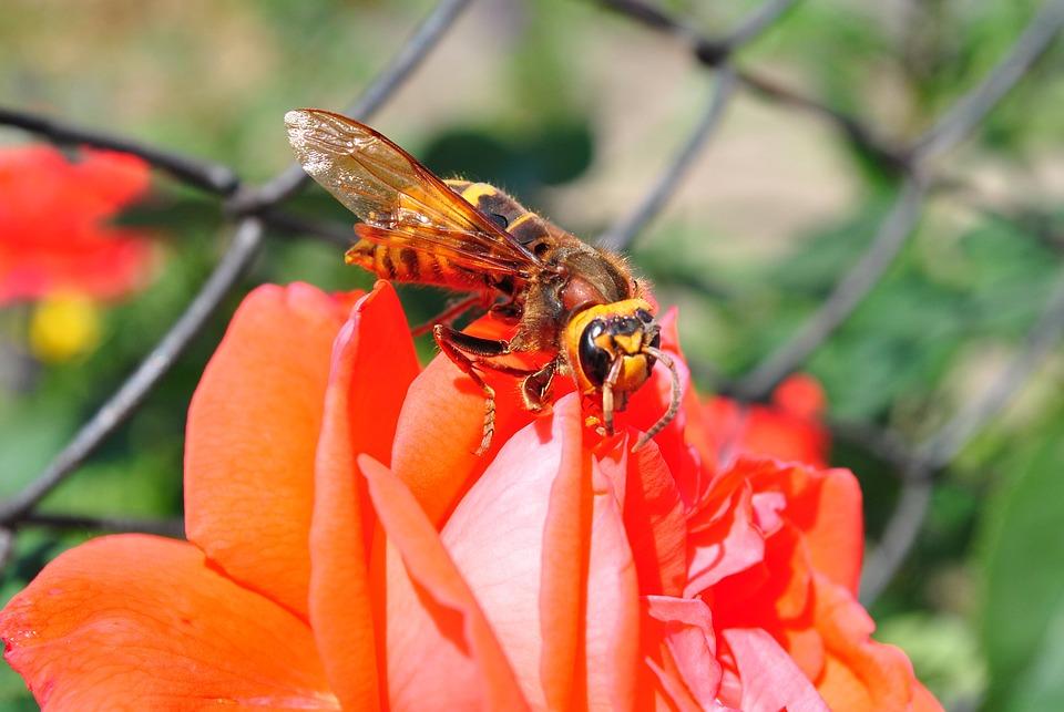 Flower, Macro, Nature, Bee