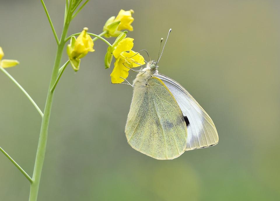 Macro, Butterfly, Kelebek, Nature, Bahar, Doğal, Flower