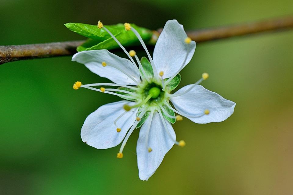 Nature, Flower, Macro