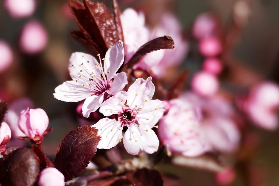 Flowers, Spring, Garden, Plant, Nature, Macro, Close Up