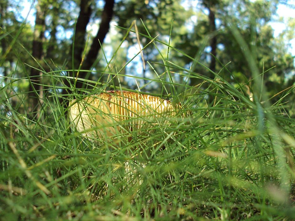 Boletus, Grass, Macro, Forest