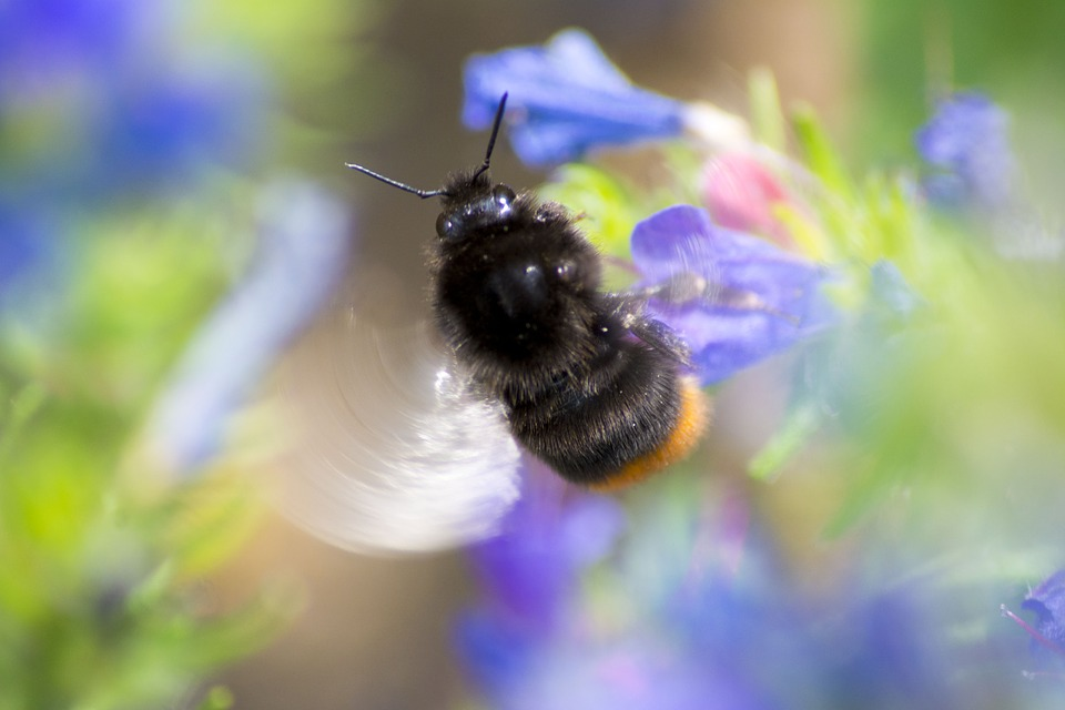 Bee, Closeup, Insect, Nature, Wings, Garden, Macro