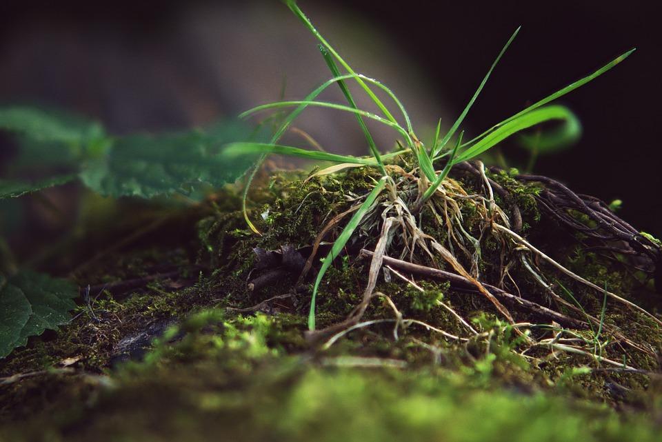 Focus Combination, Grass, Macro, Nature, Growth, Flora