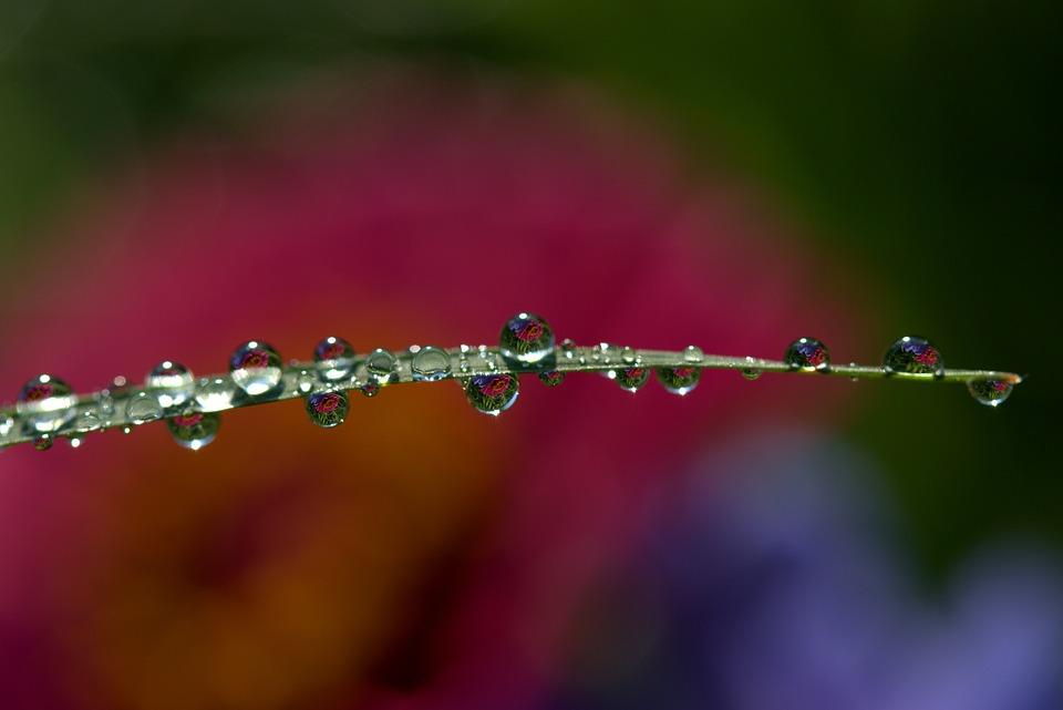 Drops, Water, Dew, Macro, Grass, Rain, Leaves, Nature