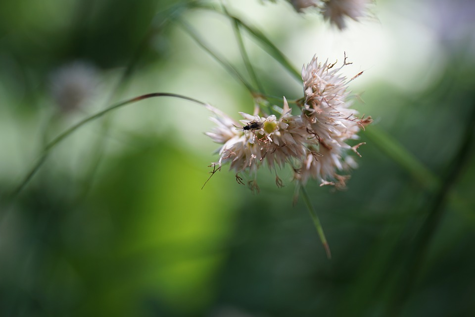 Nature, Plant, Insect, Green, Grass, Macro
