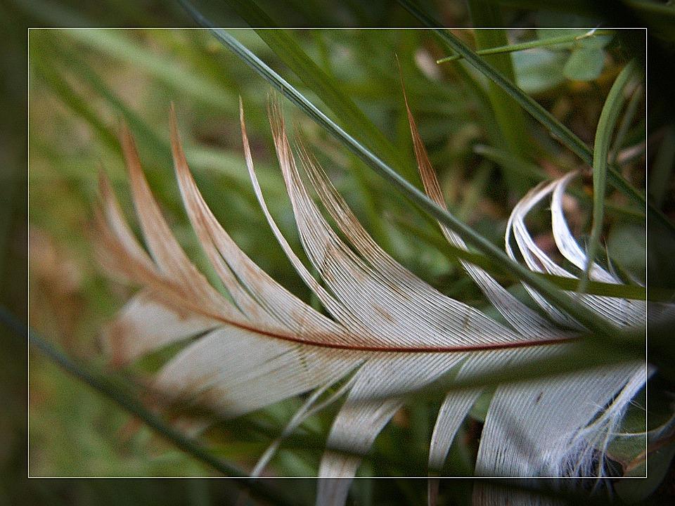 Macro, Feather, Grass, Straws, White, Green