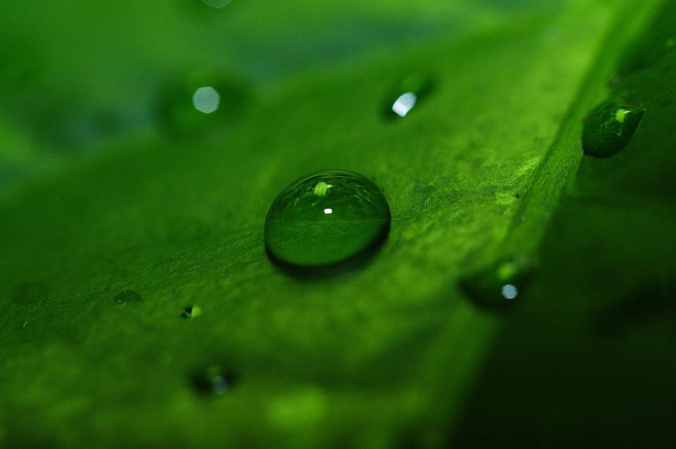 Macro, Drip, Drop Of Water, Leaf, Close, Green