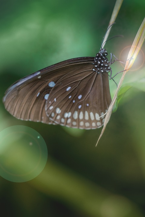 Butterfly, Macro, Insect, Animal World, Wing, Green