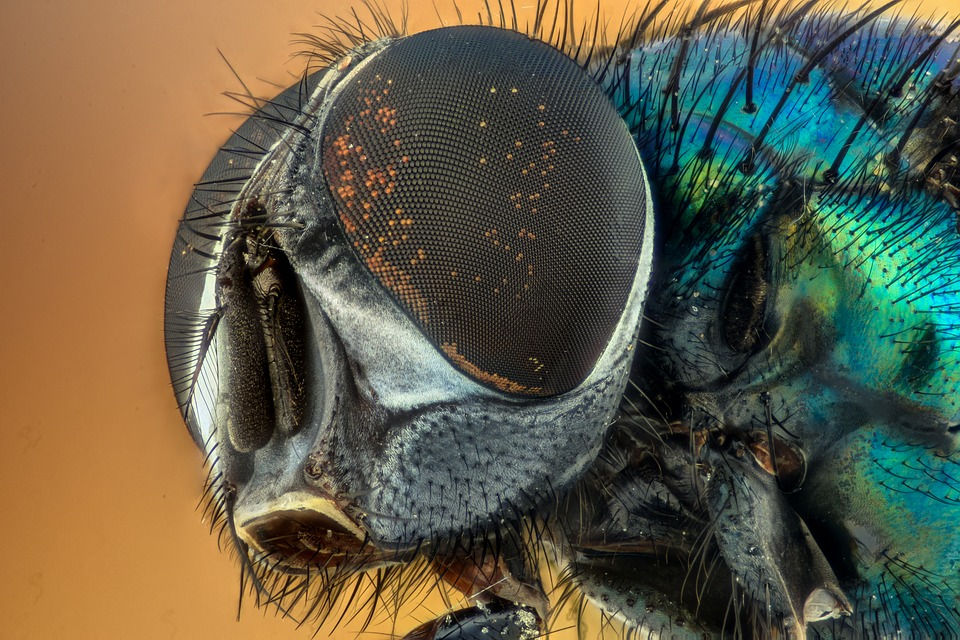 Macro, Fly, Compound Eyes, Insect, Green, Eyes, Nature
