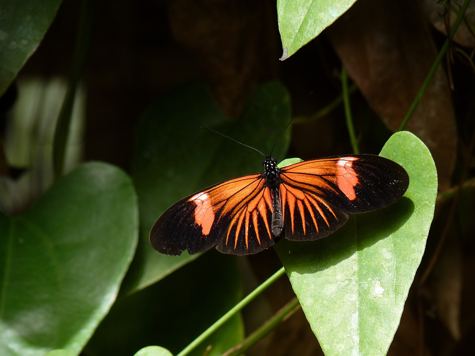 Macro, Leaf, Butterfly, Insect, Wing, Wildlife, Bug